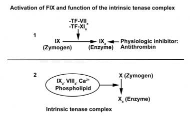 Activation of factor IX and function of the intrin