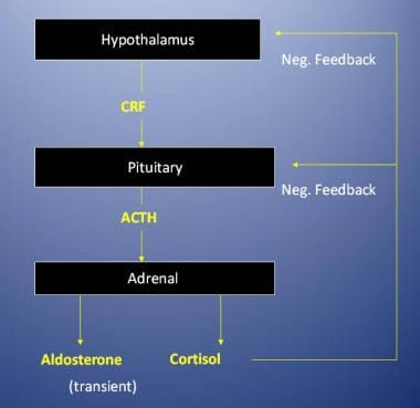 Regulation of the adrenal cortex. ACTH = adrenocor