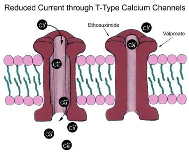 Low-voltage calcium (Ca2+) currents (T-type) are r