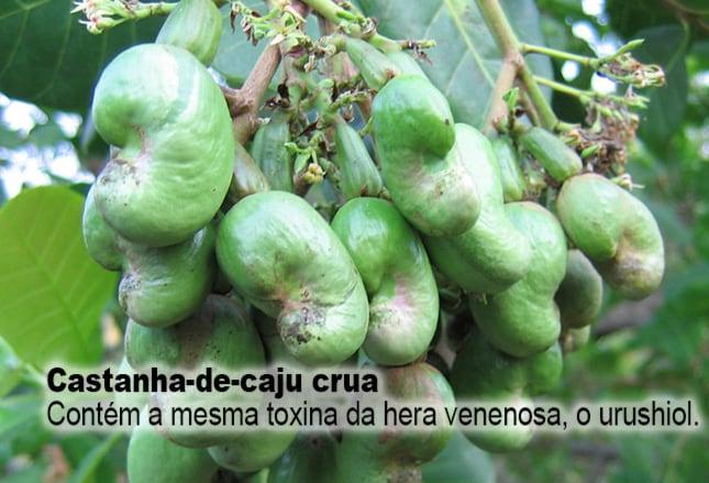 Cum sa pastram nucile, semintele si alte alimente   Ligia Pop Toxina caju