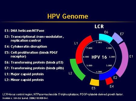 Slide 18 HPV Genome