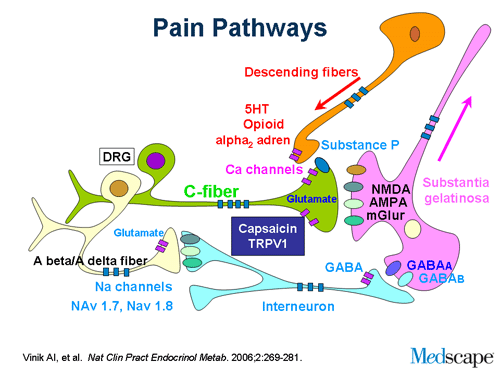 The Evolution Of The Diagnosis And Management Of Painful