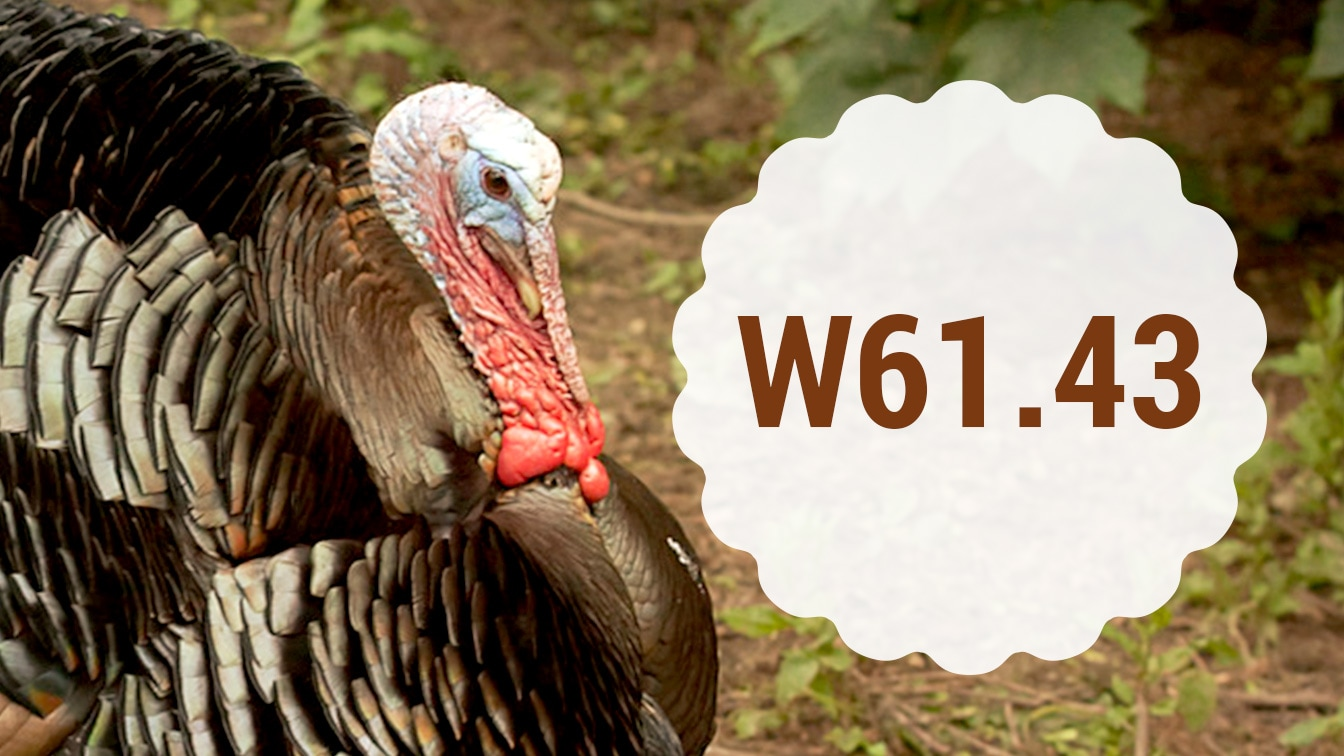 20 Wacky ICD-10 Codes for Thanksgiving