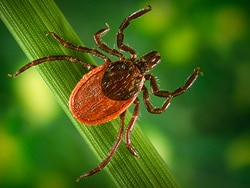 Best Tick Repellent For Humans 2020.Lyme Vaccines Show New Promise And Face Old Challenges