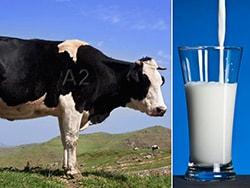 Письмо в защиту молока