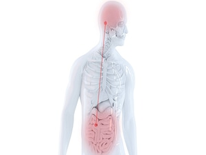 The Gut a New Therapeutic Target for Major Depression?