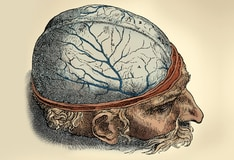 Brain Anatomy: Overview, Gross Anatomy: Cerebrum, Gross