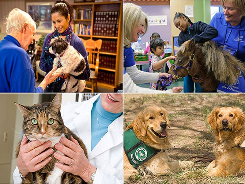 Animals and Healthcare Facilities: A Healthy Match?